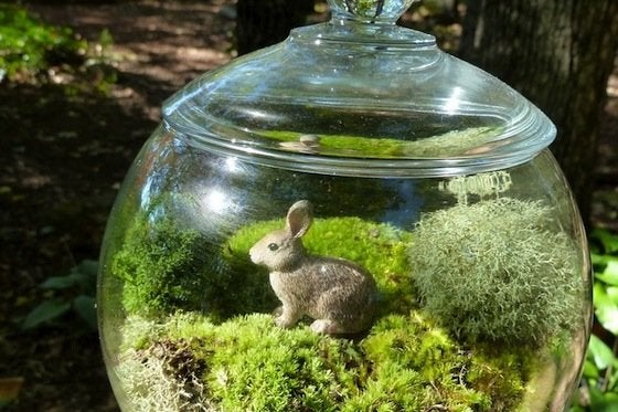 How to Make a Terrrarium