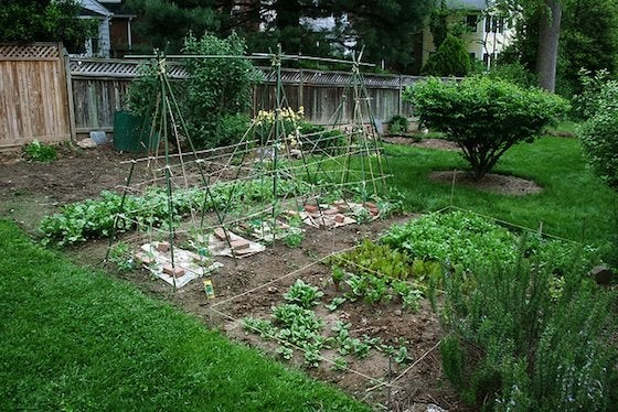 How to Plant a Vegetable Garden - Layout