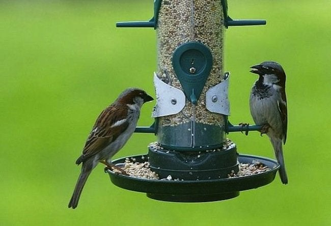 Green Tips for the Home - Birdfeeder