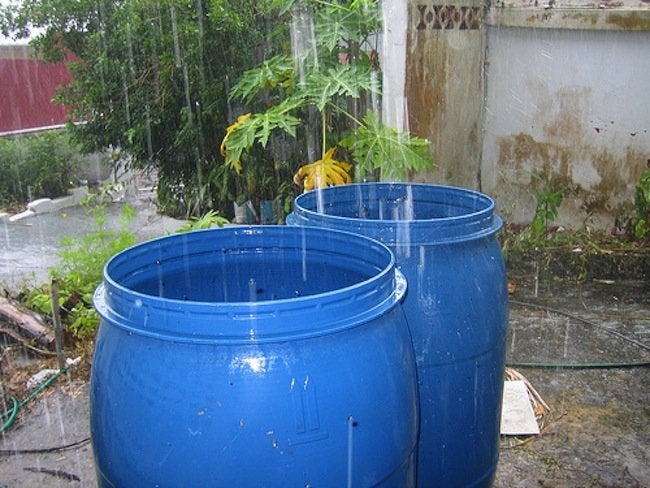 Green Tips for the Home - Rainwater Collection