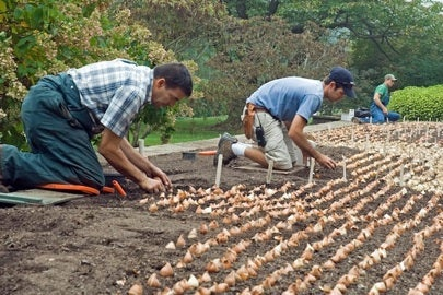 How to Plant Bulbs