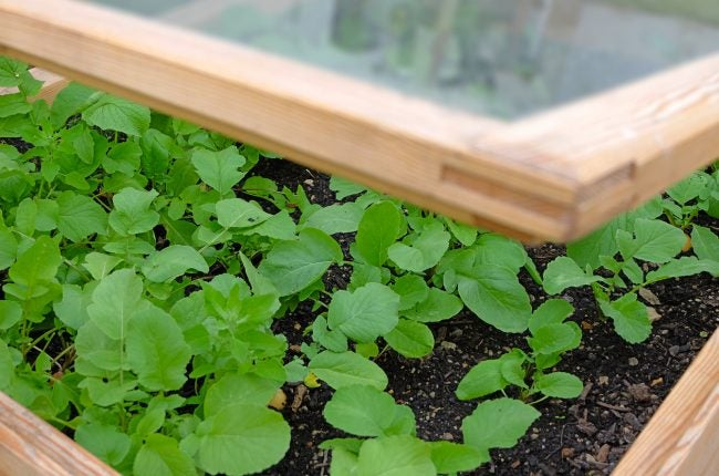 See How a DIY Cold Frame Could Extend Your Gardening Season