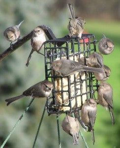 How to Care for Winter Birds - Feeder