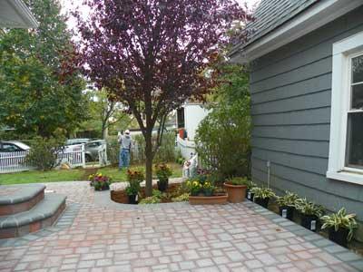Ornamental plum tree