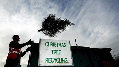 Christmas Tree Recycling - Treecycling