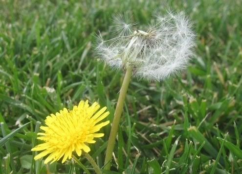 Fall Lawn Maintenance - Weeding