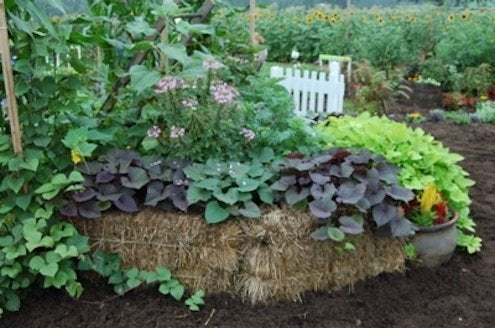 Straw Bale DIY - Planter