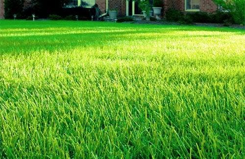 Lawn Prep