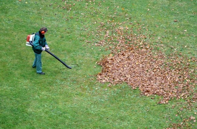 How to Use a Leaf Blower Safely