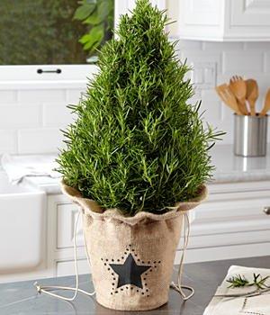 Decorative tabletop Christmas tree - ProFlowers