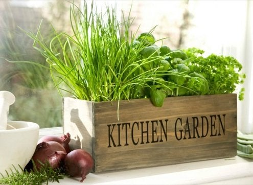 Add Flavor to Your Kitchen with a Winter Herb Garden