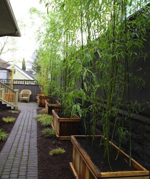 Landscaping with Bamboo - Planters