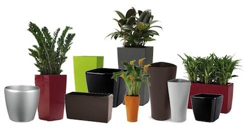 Cleaning-Plant-Containers