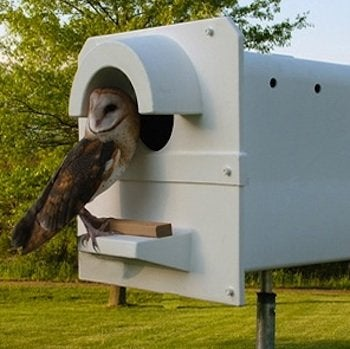 Barn Owls to Control Rodents - Nesting Box