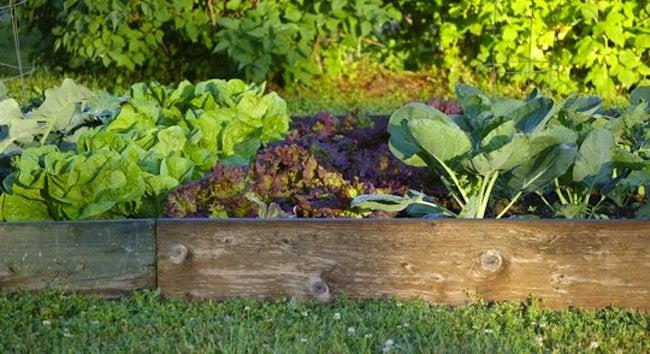 DIY Kids - Vegetable Garden