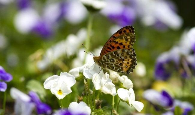 Butterfly-Gardens