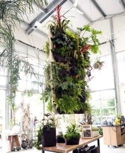 Vertical Gardens - Indoors