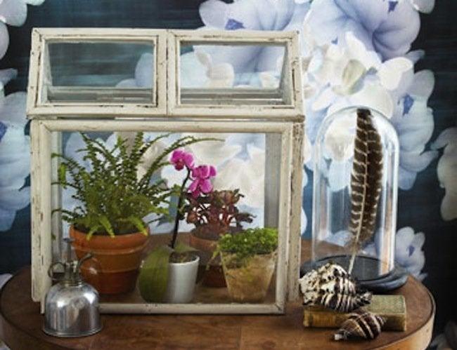 Repurpose Frames - Terrarium