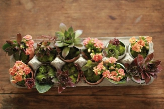 Reuse Egg Cartons - Planter