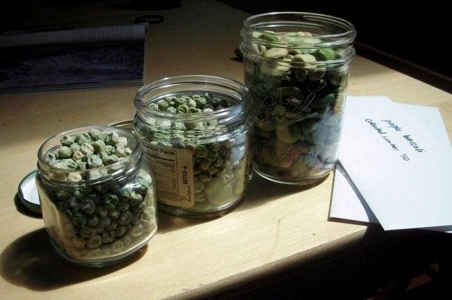 Saving Seeds - Drying
