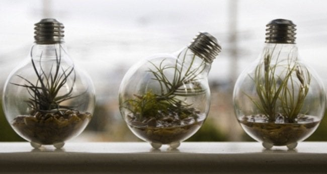 Light Bulb DIY Projects - Terrarium