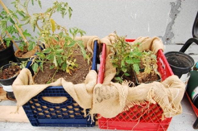 Repurpose Drawers - Planter