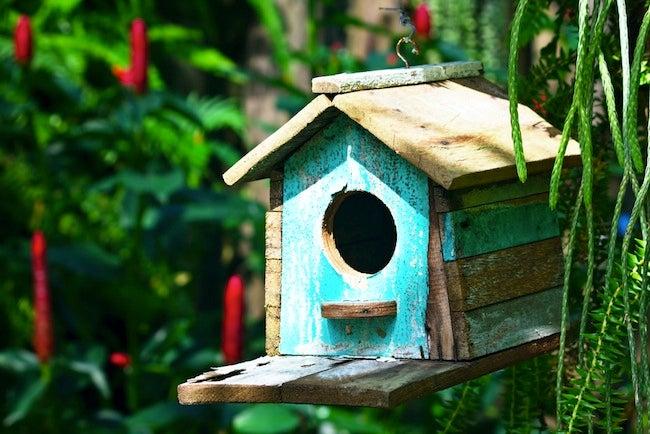Planning Bird Houses