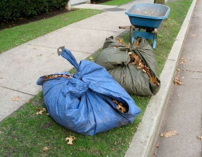 Raking Leaves onto Tarps Makes for Easy Disposal