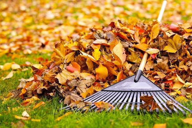 Raking Leaves Tips