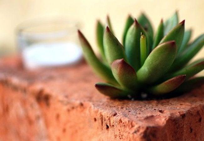 Uses for Bricks - Planter