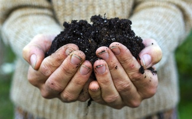 Uses for Wood Ash - Amend Soil