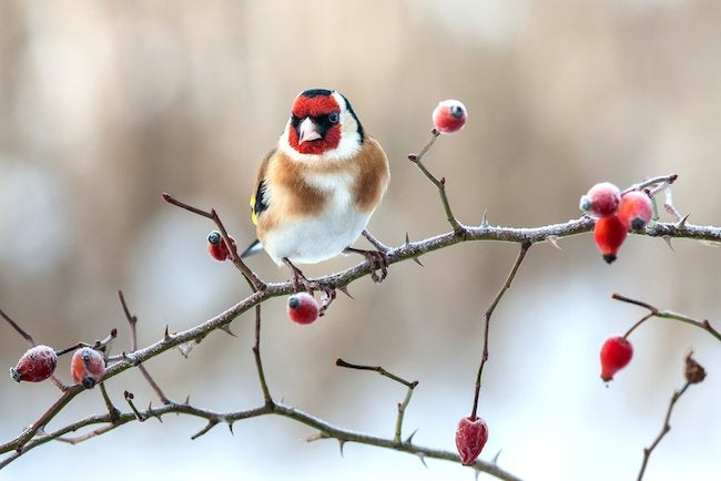 How to Care for Winter Birds
