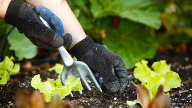 Prepping Spring Garden