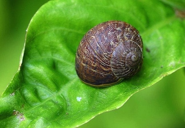 Uses for Coffee Grounds - Snails