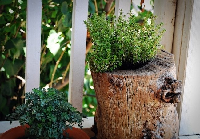 Tree Stump Ideas - Planter