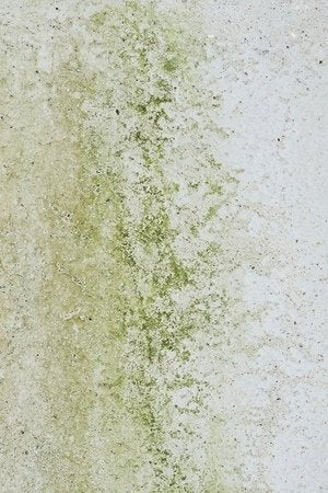 How to Kill Mold - Detail Mold