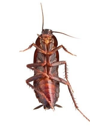 How to Get Rid of Cockroaches - Bob Vila
