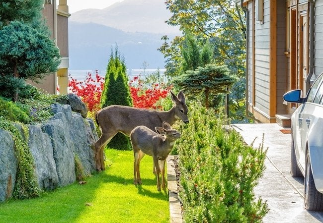 How to Keep Deer Out of a Garden