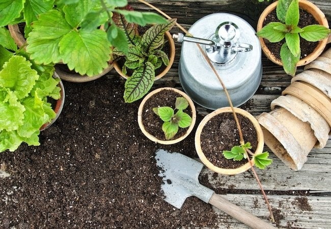 How To: Repot a Plant