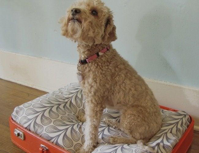 DIY Dog Bed - Suitcase