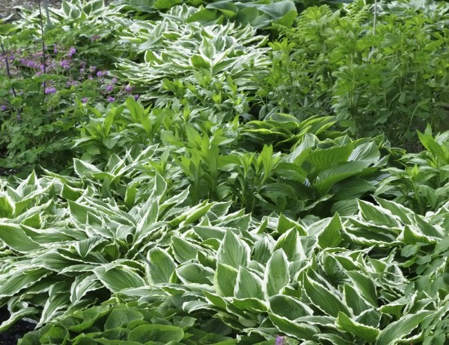 How to Plant Ground Cover