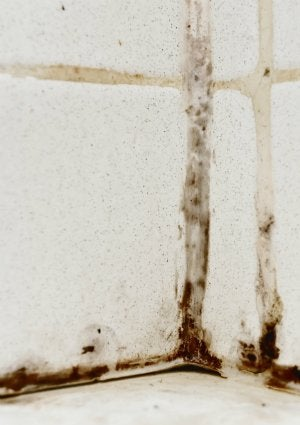 How To Get Rid Of Mildew Smell   Mold Detail