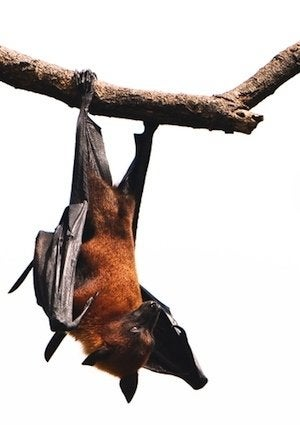 How to Get Rid of Bats - Bob Vila How Much Does It Cost To Dig Out A Bat on