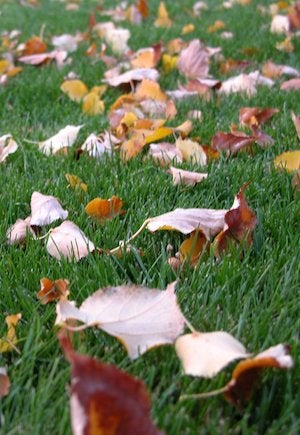 Mulching Leaves - Close-Up Shot