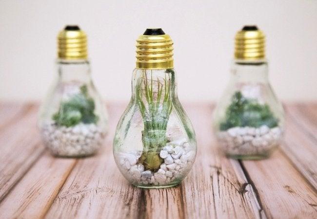 Darby Smart - Light Bulb Planter