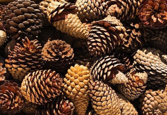 DIY Fire Starter - Pine Cones