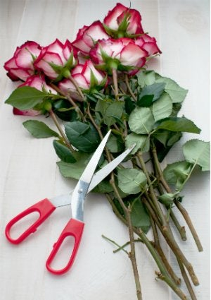 How to Keep Cut Flowers Fresh - Snips