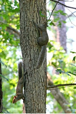 How to Get Rid of Squirrels - Tree Branch