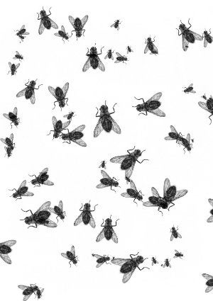 How to Get Rid of Flies in the House - Insects