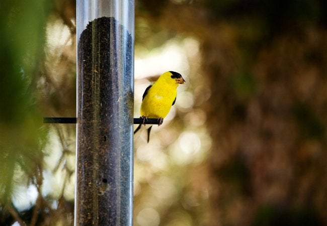 How To Attract Birds - Bird Feeder